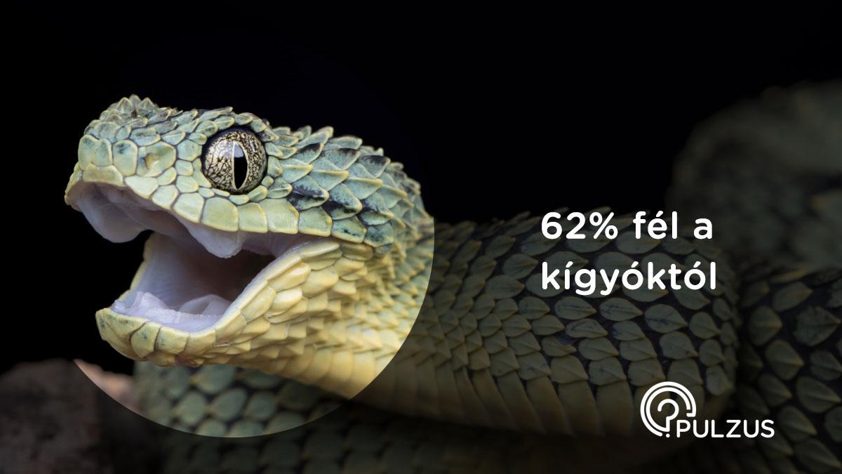 Pulzus kutatás - félelem a kígyóktóll