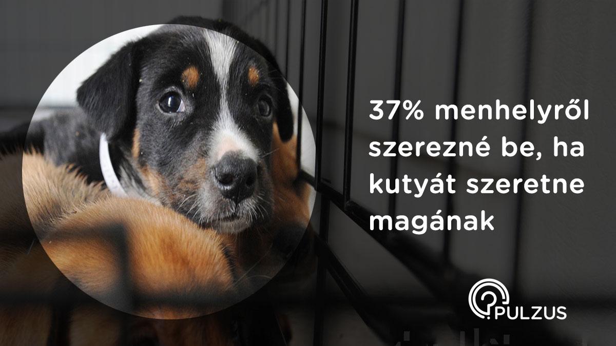 Pulzus kutatás - kutyát menhelyről