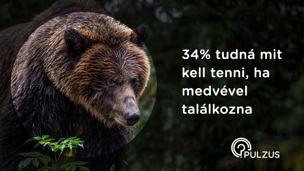 Pulzus kutatás - találkozás egy medvével