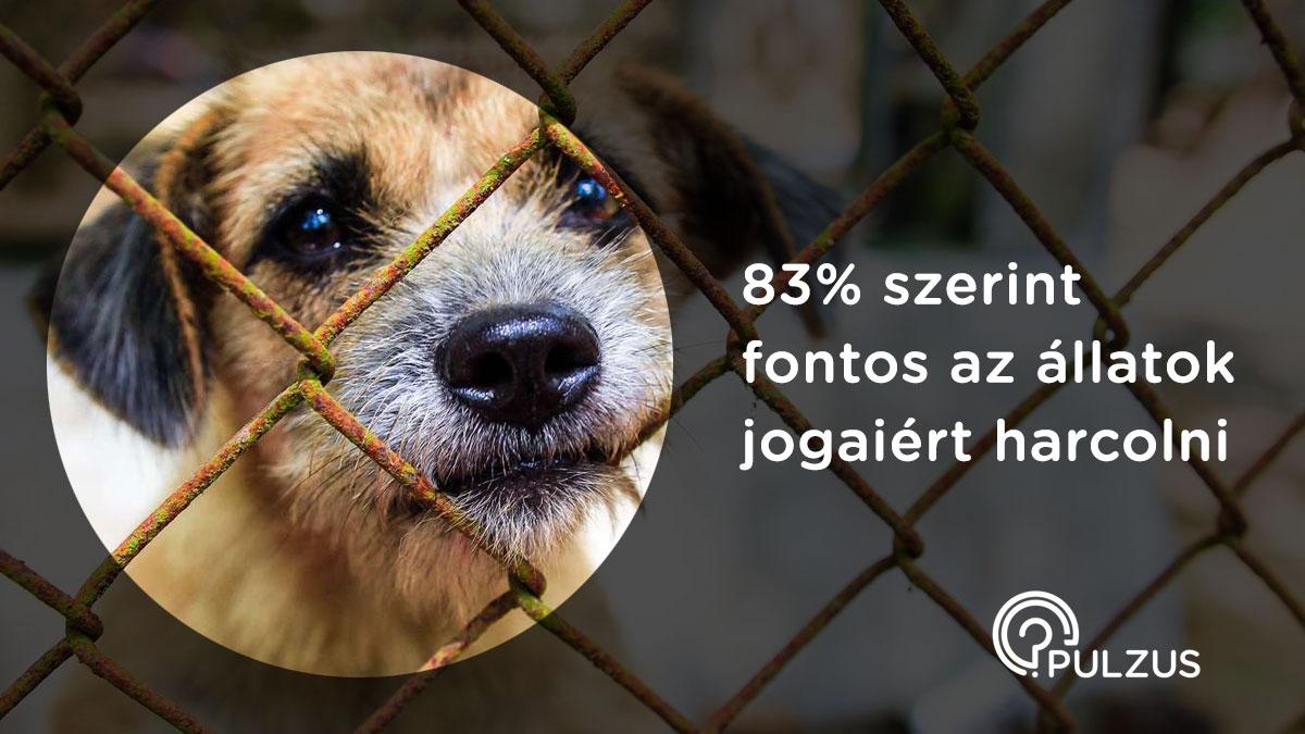 Fontos az álllatok jogaiért harcolni - Pulzus kutatás