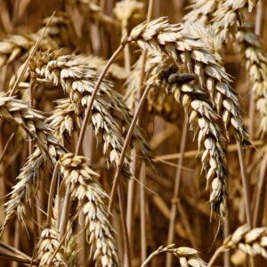 Mi az a GMO és mit tudsz róla? - Pulzus közvéleménykutatás
